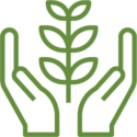 Hands supporting plant growth